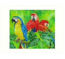 Magnificent Macaws Art Print