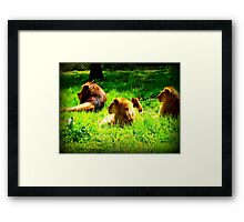Lion around Framed Print