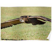 Hoot In Flight Poster