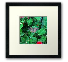 Not Fooling Anybody With Those Eyes Framed Print