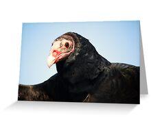 Turkey Vulture Greeting Card