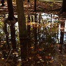 Autumn Puddle Reflections#14 by linmarie