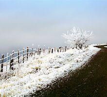 Rimrock Road by Kathleen Jones