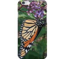 Feeding Adult Monarch Butterfly iPhone Case/Skin