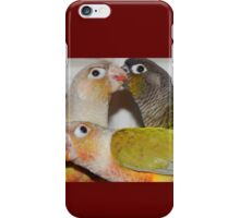 Three Conures Playing iPhone Case/Skin
