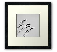 Moss squadron Framed Print