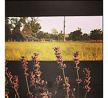 Fence line of purple flowers at sunset in Washington State Photographic Print