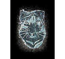 Tiger Tiger (second version!) Photographic Print