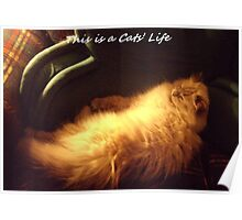 A Cats Life Poster