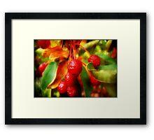 Cherry Berry ©  Framed Print