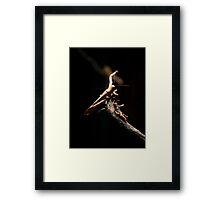 lets see who can jump higher... Framed Print