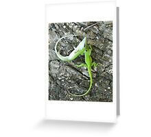 Little Dinosaurs fighting Greeting Card