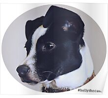 Holly the canine portrait Poster