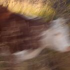 Heifer Moving by rjcolby