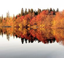 Red trees reflection in mirror lake by ibphotos
