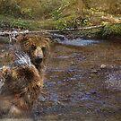 Fading Grizzlies by Kay Kempton Raade