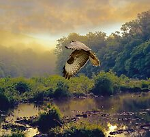 Morning Buzzard by peaky40