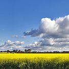 Canola by Throwing  Buckets Magazine