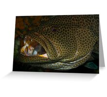 Grouper Cleaning Station Greeting Card