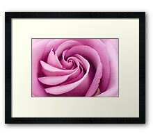 Pink Rose Folded To Perfection Framed Print