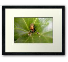 Beetle Beetle Framed Print