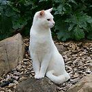 Rock Cat by sedge808