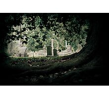 """""""Roots"""" - Elmwood Cemetery - Memphis, Tennessee Photographic Print"""