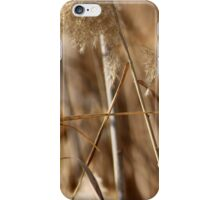 Canes 1 iPhone Case/Skin