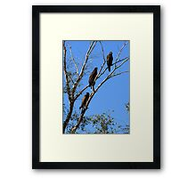 Harris's Hawks ~ Family meeting Framed Print