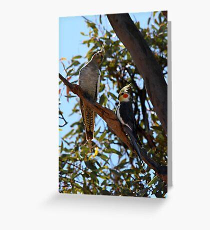 Cockatiel Pair Greeting Card