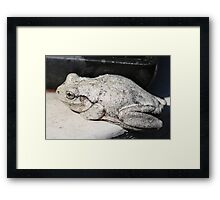 Peron's Tree Frog Framed Print