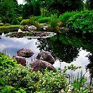 Garden Reflections ... by Juergen Weiss