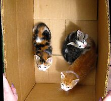 """""""It says it on the box, lady.  You must take us with  you 'cause we're cute."""" by Edmond J. [""""Skip""""] O'Neill"""