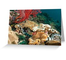 Banded Sea Krait off Port Moresby, Papua New Guinea Greeting Card