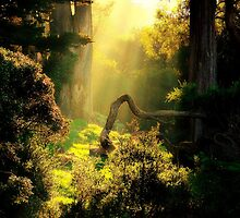 Golden Sun Upon Buena Vista Park, San Francisco, CA by Shandopics