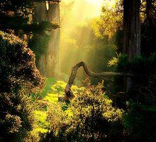 Golden Sun Upon Buena Vista Park, San Francisco, CA by Shandopics