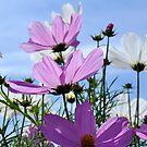 Garden of Flowers by Barbara Burkhardt
