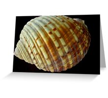 Shell 2 on Black Background Greeting Card