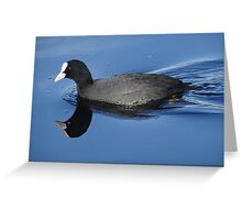 Coot Reflection Greeting Card