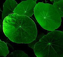 feeling green by Loreto Bautista Jr.