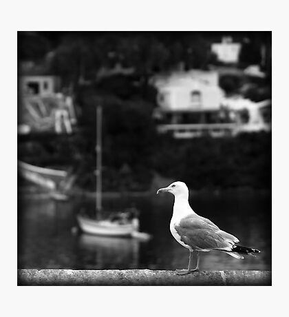 seagull watch in port mahon Photographic Print