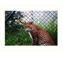 Panther - Leopard Art Print