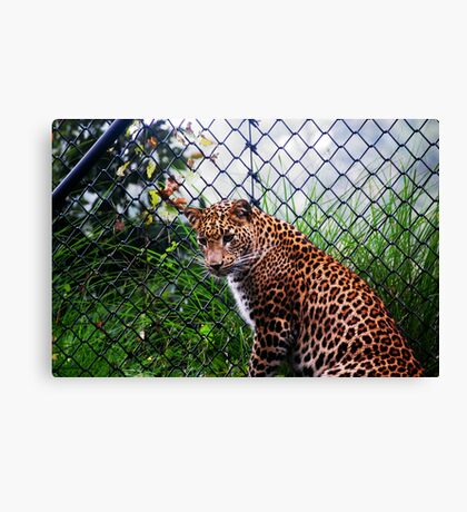 Panther - Leopard Canvas Print