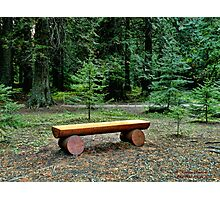 Forest Bench Photographic Print