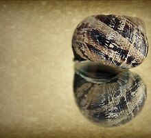 ~ Just an Empty Shell ~ by Lynda Heins
