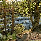 Glacier Autumn 2 (MacDonald Creek) by rocamiadesign