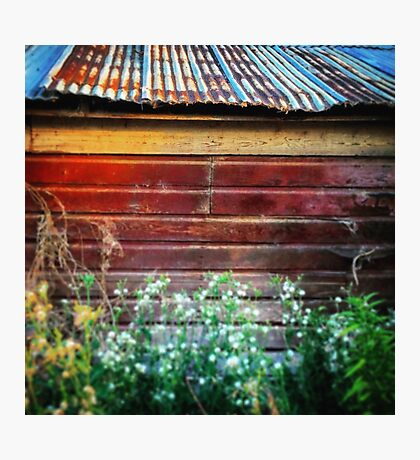 Rusty tin roof on a red barn  Photographic Print