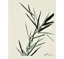 Reed's Reeds Photographic Print