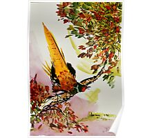 Pheasant on Branch Poster