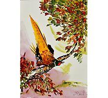 Pheasant on Branch Photographic Print